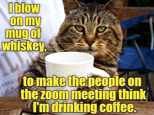 virtual meeting meme